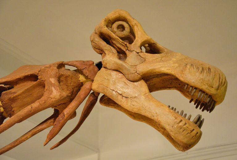 I got . How Big Is That Titanosaur?