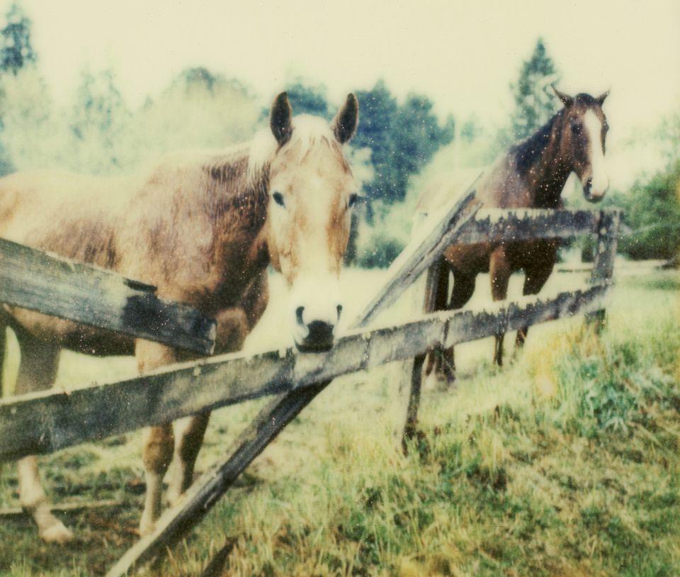 Horses standing behind broken fence rails.