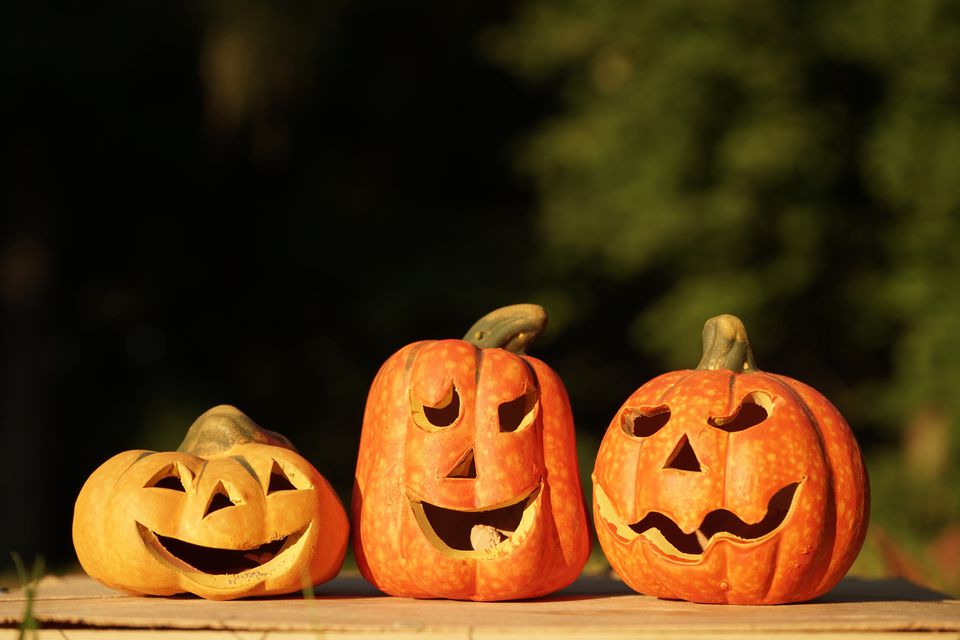 Three carved pumpkins in a row.
