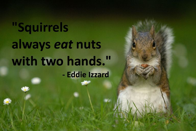 Squirrel with Eddie Izzard quote