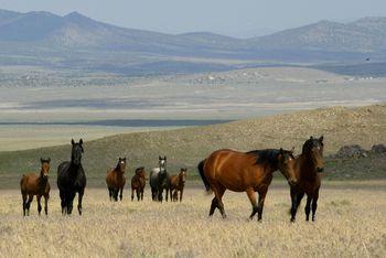 Abandoned Mine Hazards On Public Lands In Nevada Nv