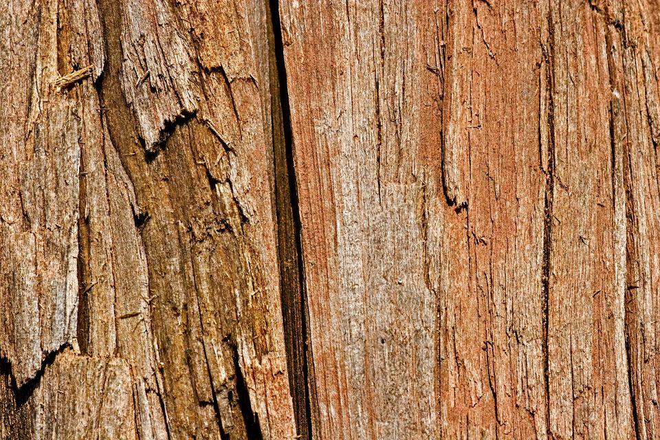 wood fibers