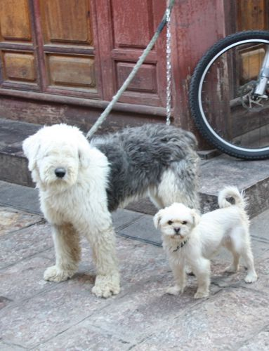 pets in china