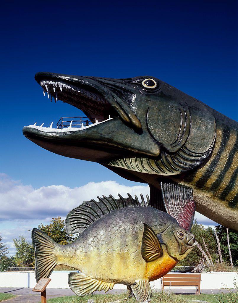 猛犸Muskie在威斯康星州海沃德的渔业名人堂