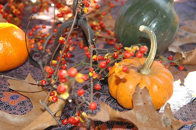Thanksgiving Table Decoration from StarMama on Flickr