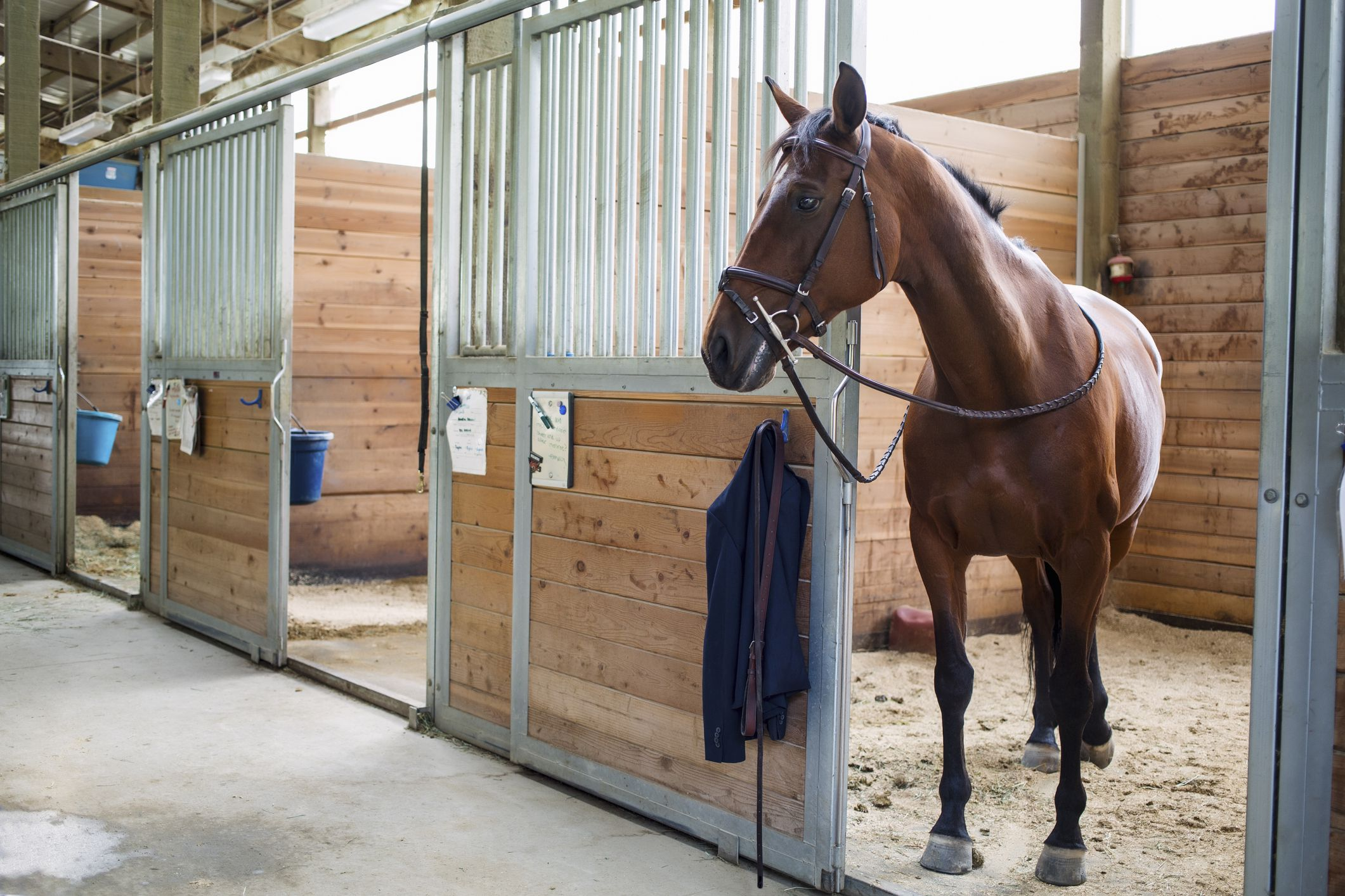 How to choose a boarding stable for your horse for Horse farm