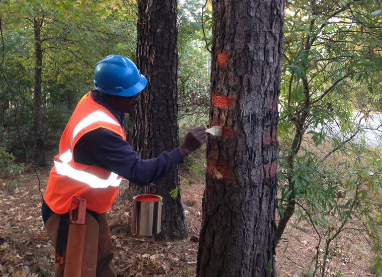 The Essentials Of Timber And Tree Marking