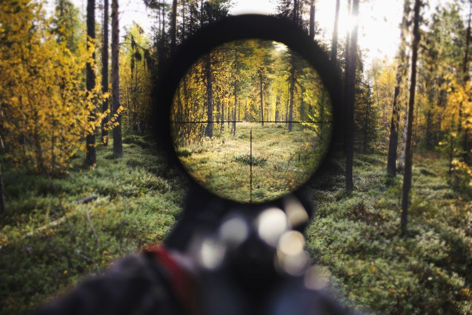 View of the forest from a rifle sight