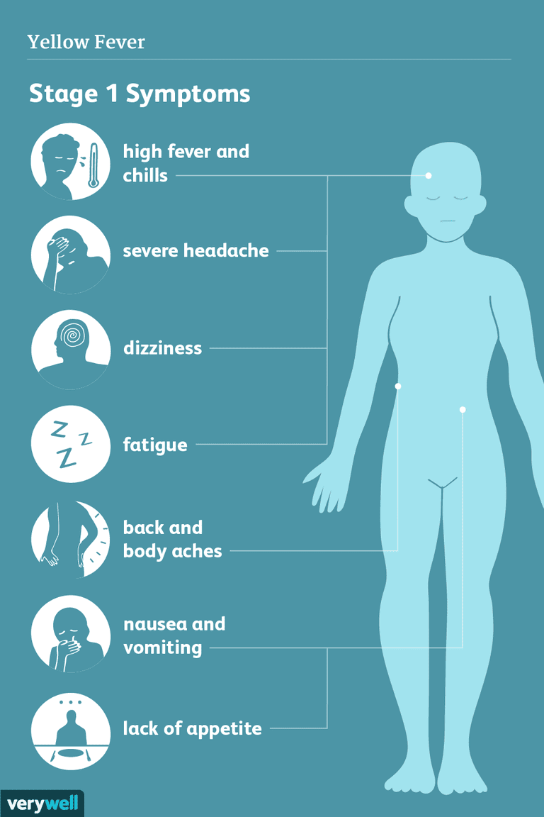 yellow fever symptoms