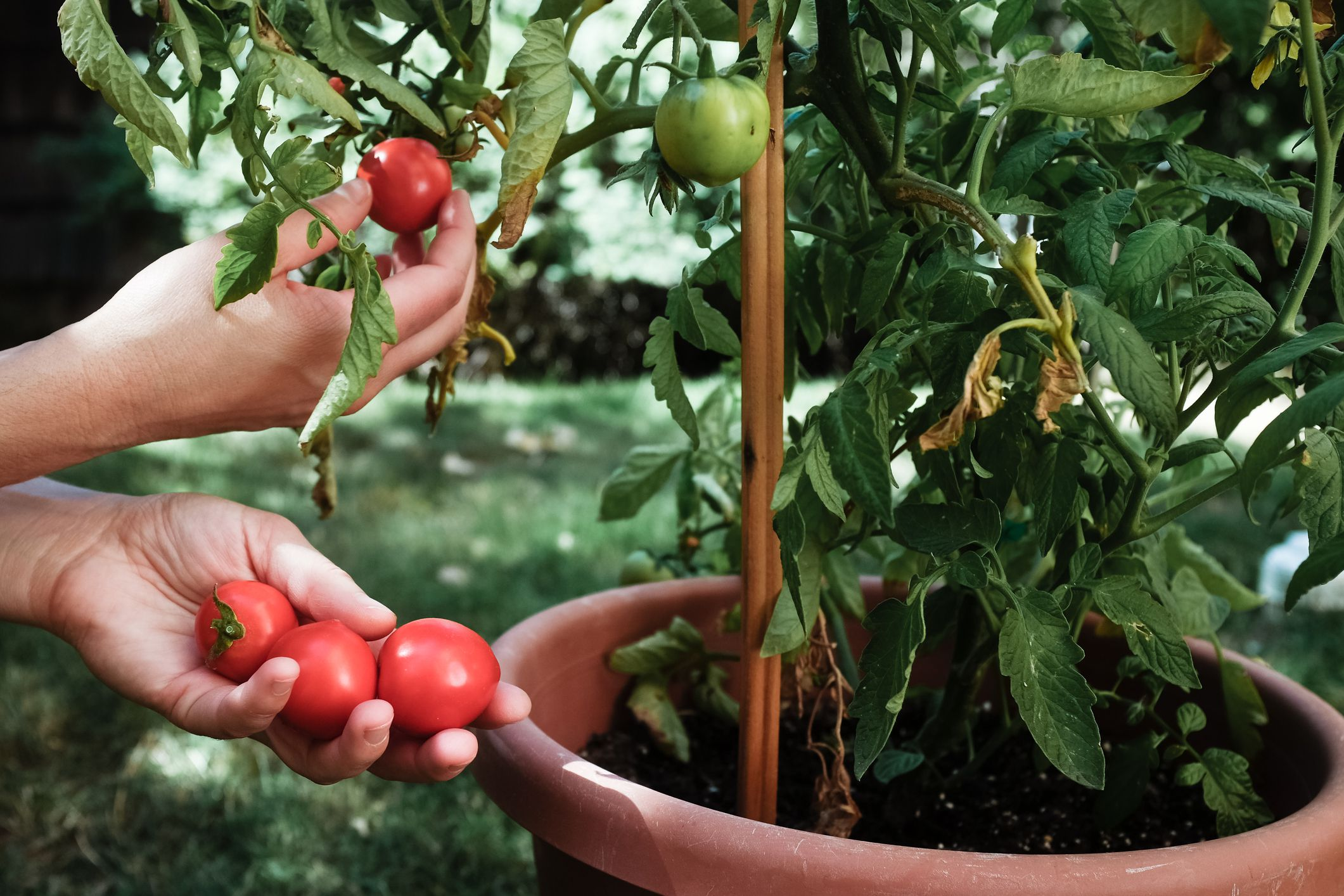 Warm climate container vegetable gardening - Best vegetables for container gardening ...
