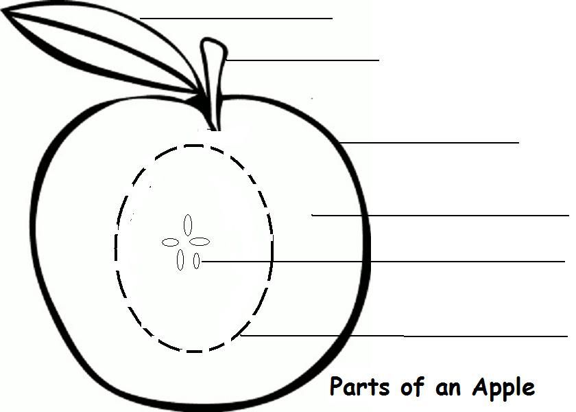Parts of an Apple Learning Activity – Eye Diagram Worksheet