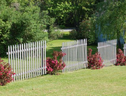 Image Result For Living Privacy Fences Using Shrub Hedges