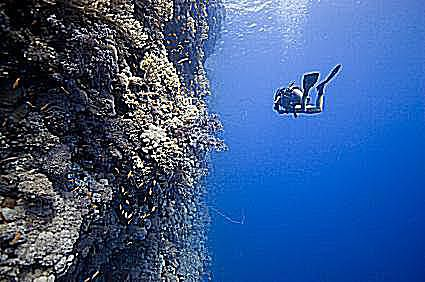 a diver with a good air consumption rate swims along a wall in the red sea