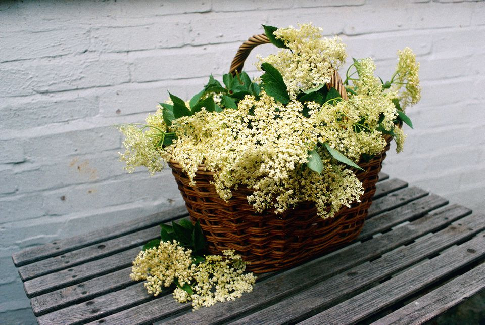 elderflower-recipes