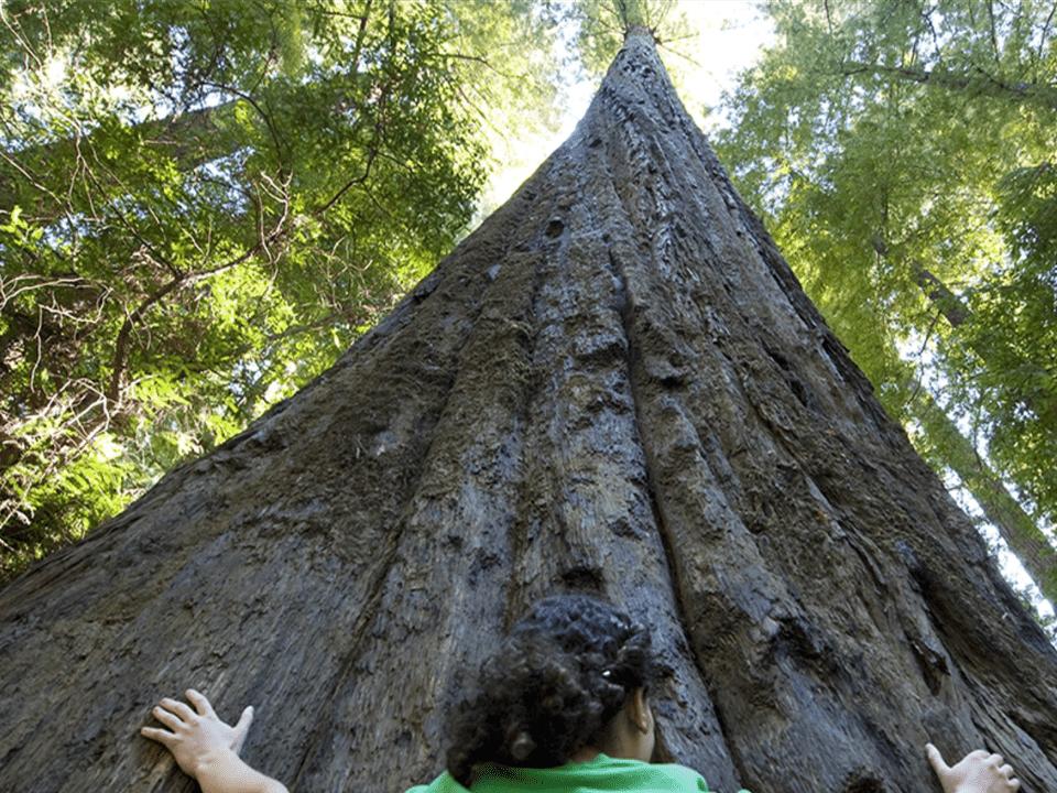 Redwood State Park California