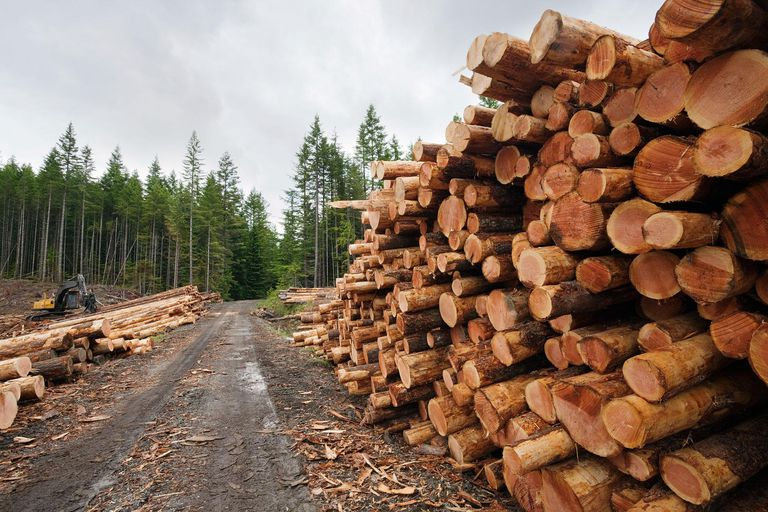 Fresh cut logs stacked by the road ready to be loaded into logging trucks and processed.