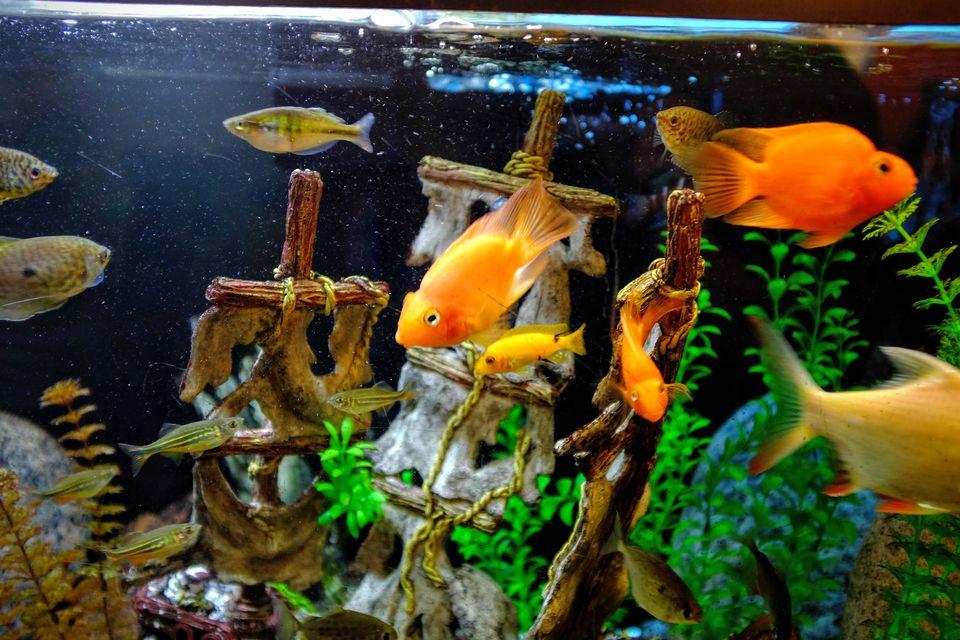 Aquarium nitrates