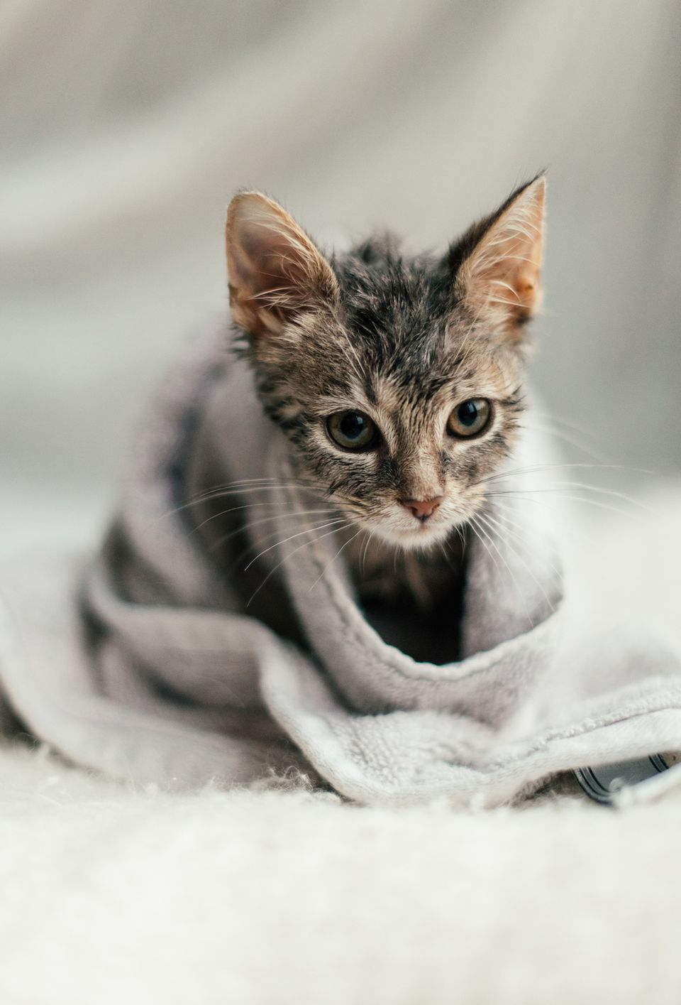 kitten wrapped in a towel after a bath