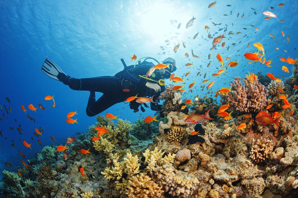 Scuba diving in Sabah, Borneo
