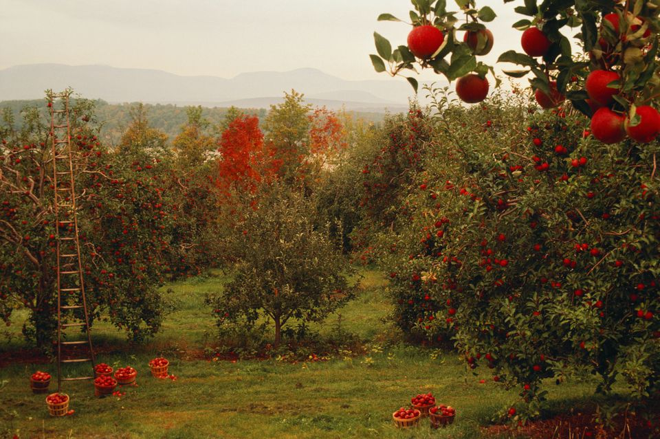 Best Hudson Valley You-Pick Farms