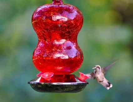 product ruby yardbirds zoom red hummingbird feeder hanging