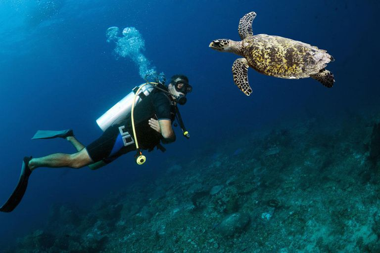 Hawksbill turtle (Eretmochelys imbricata) with a male scuba diver. Indonesia.