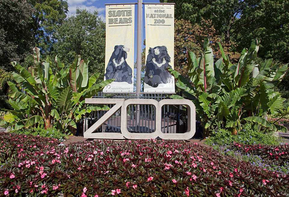 Visiting the National Zoo in Washington, D.C.