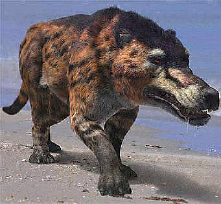 Andrewsarchus—the World's Largest Predatory Mammal