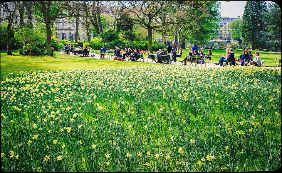 Springtime at the Jardin du Luxembourg in Paris: always divine.