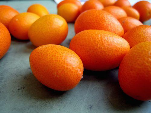 Kumquat - Citrus