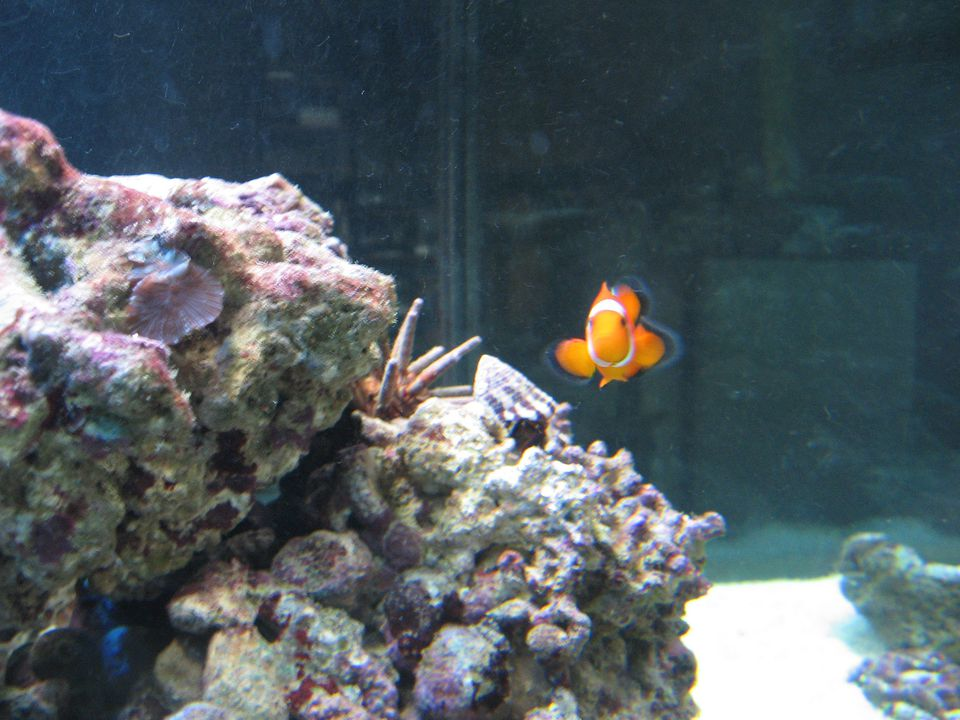 Live rock aquarium