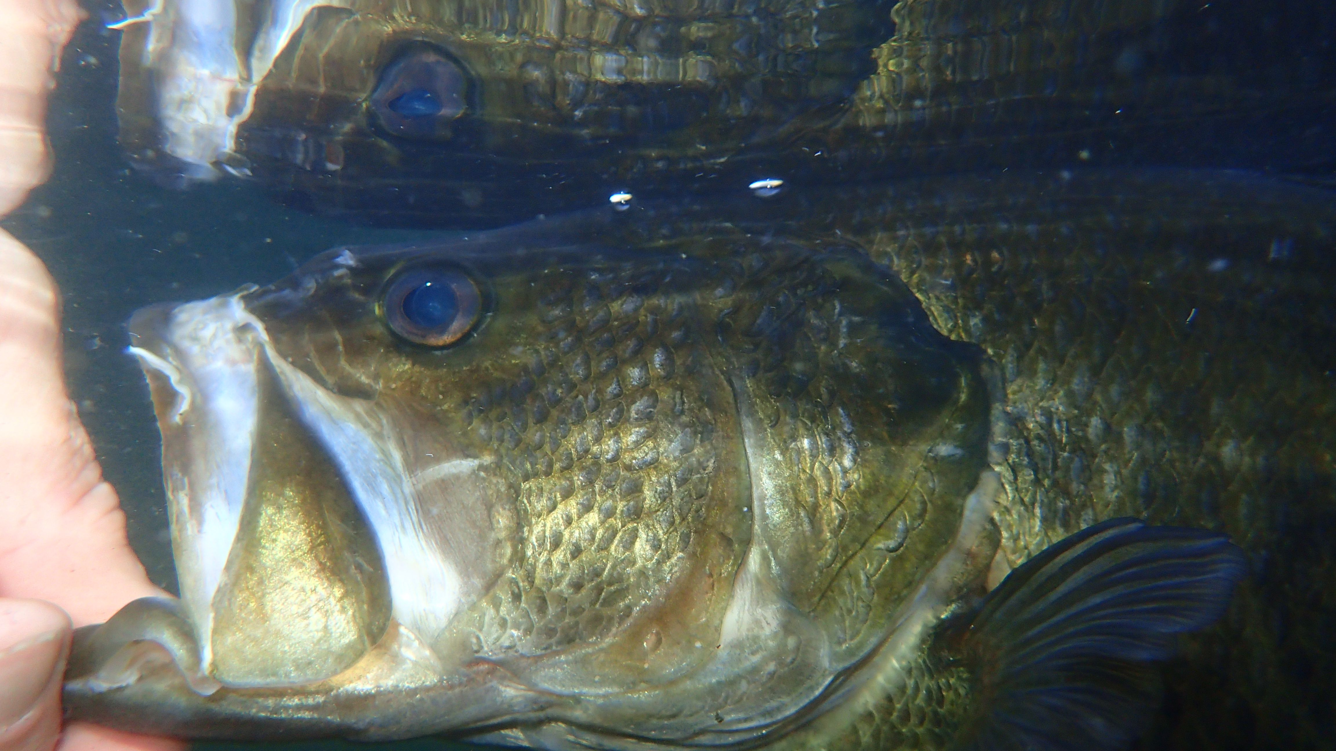 Facts and Thoughts About Fishing for Spawning Bass