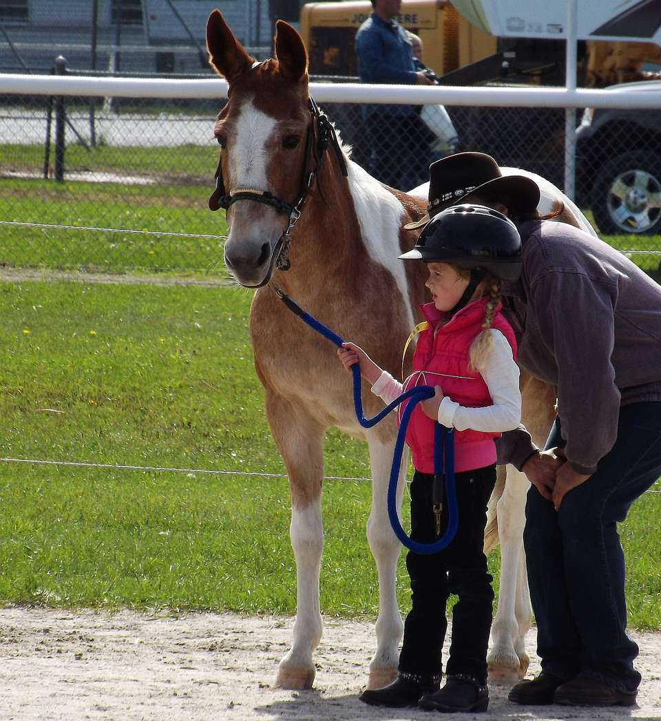 Pony sized mule held by child.