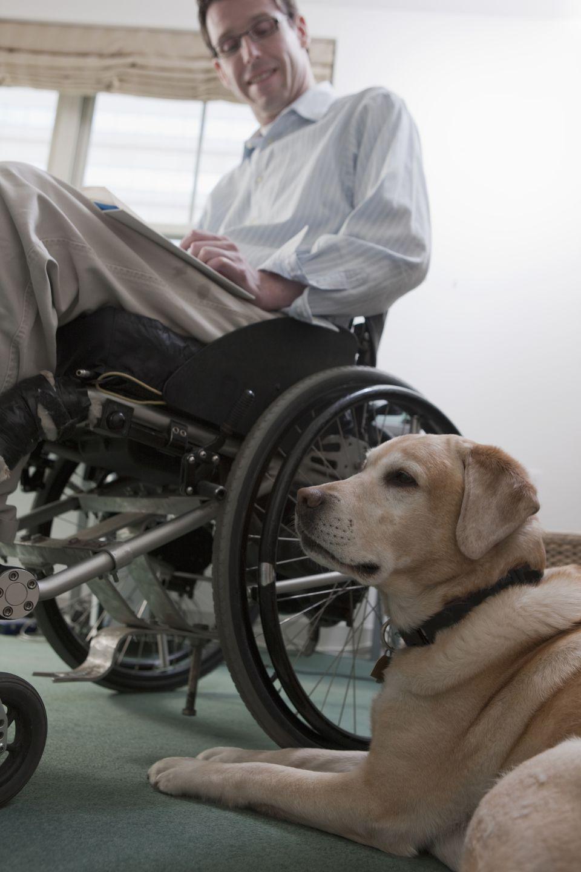 A dog sits on the floor near a man in a wheelchair.
