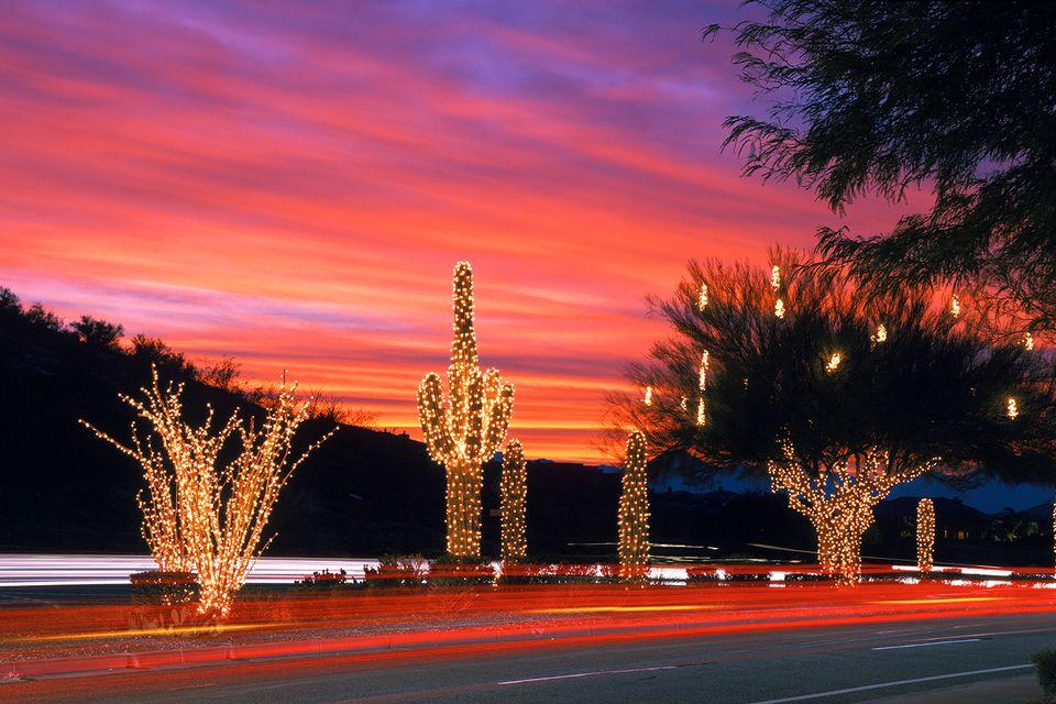 Phoenix Arizona Christmas Cacti