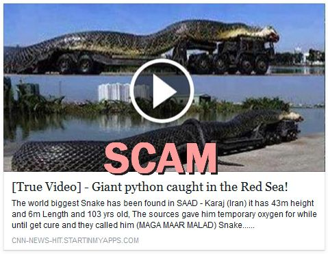 True Video - Giant python caught in the Red Sea! The world biggest Snake has been found in SAAD - Karaj (Iran)