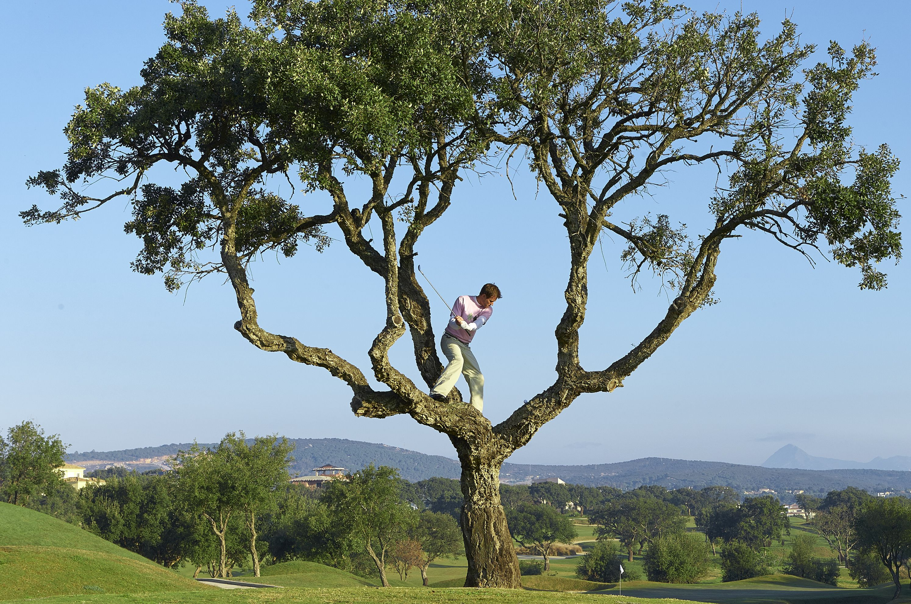 how to proceed when your golf ball is stuck in a tree