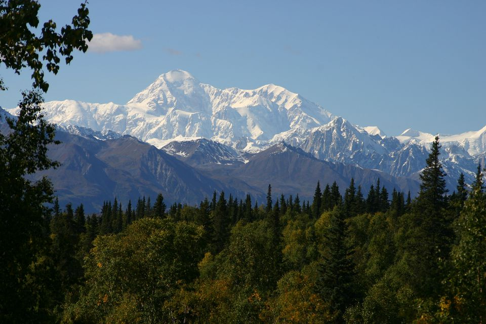 Trees in Denali National Park with a snow-capped Denali in the background