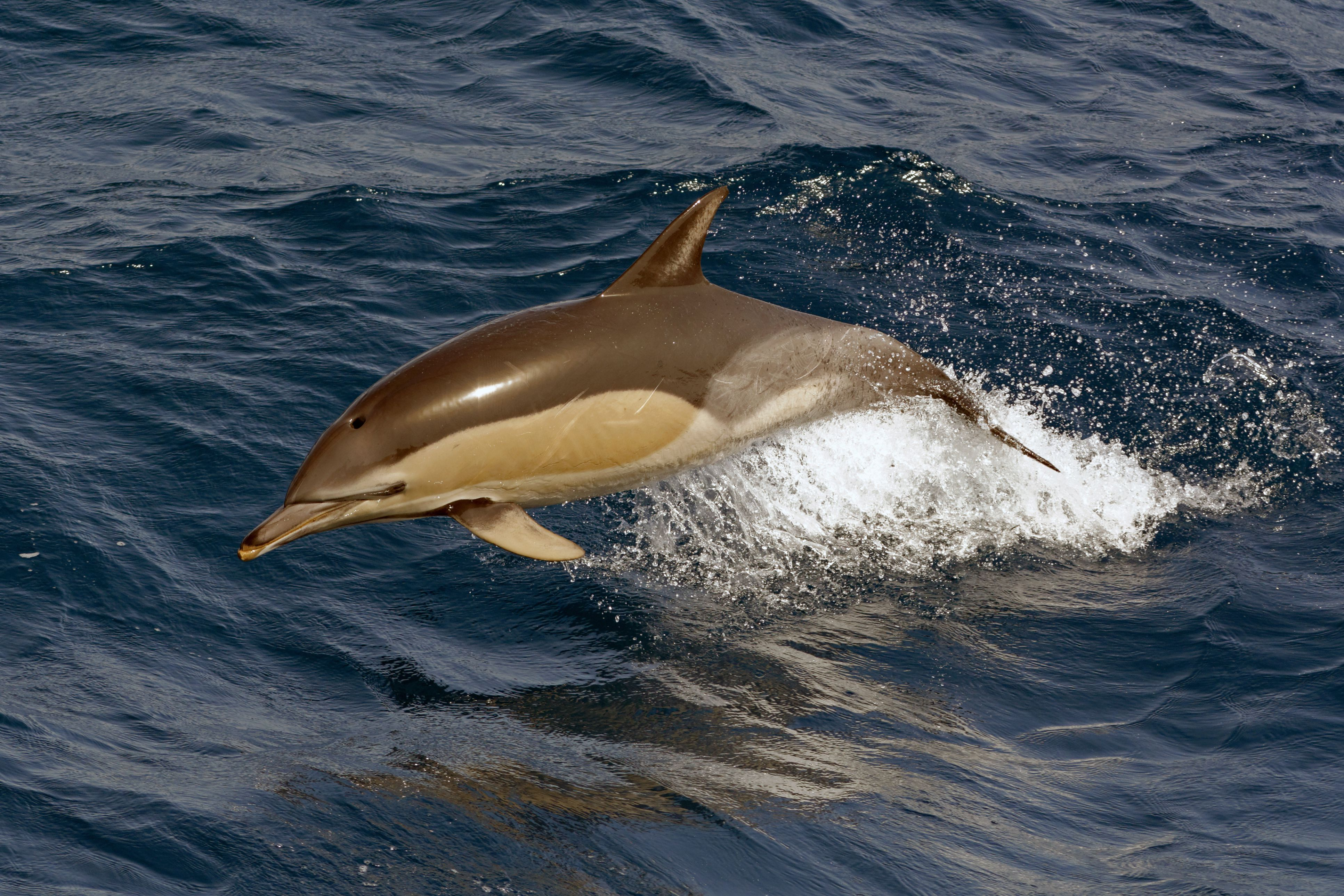 why do whales u0026 dolphins strand themselves on beaches