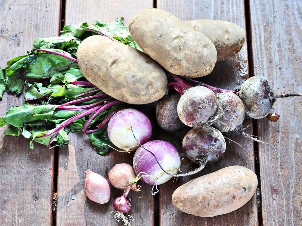 Harvested Root Vegetables