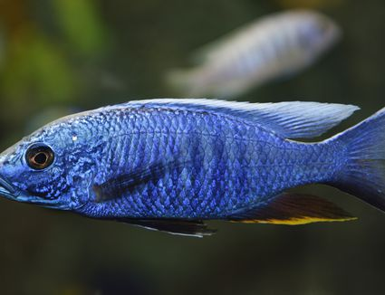 Common Fish Names Beginning With H