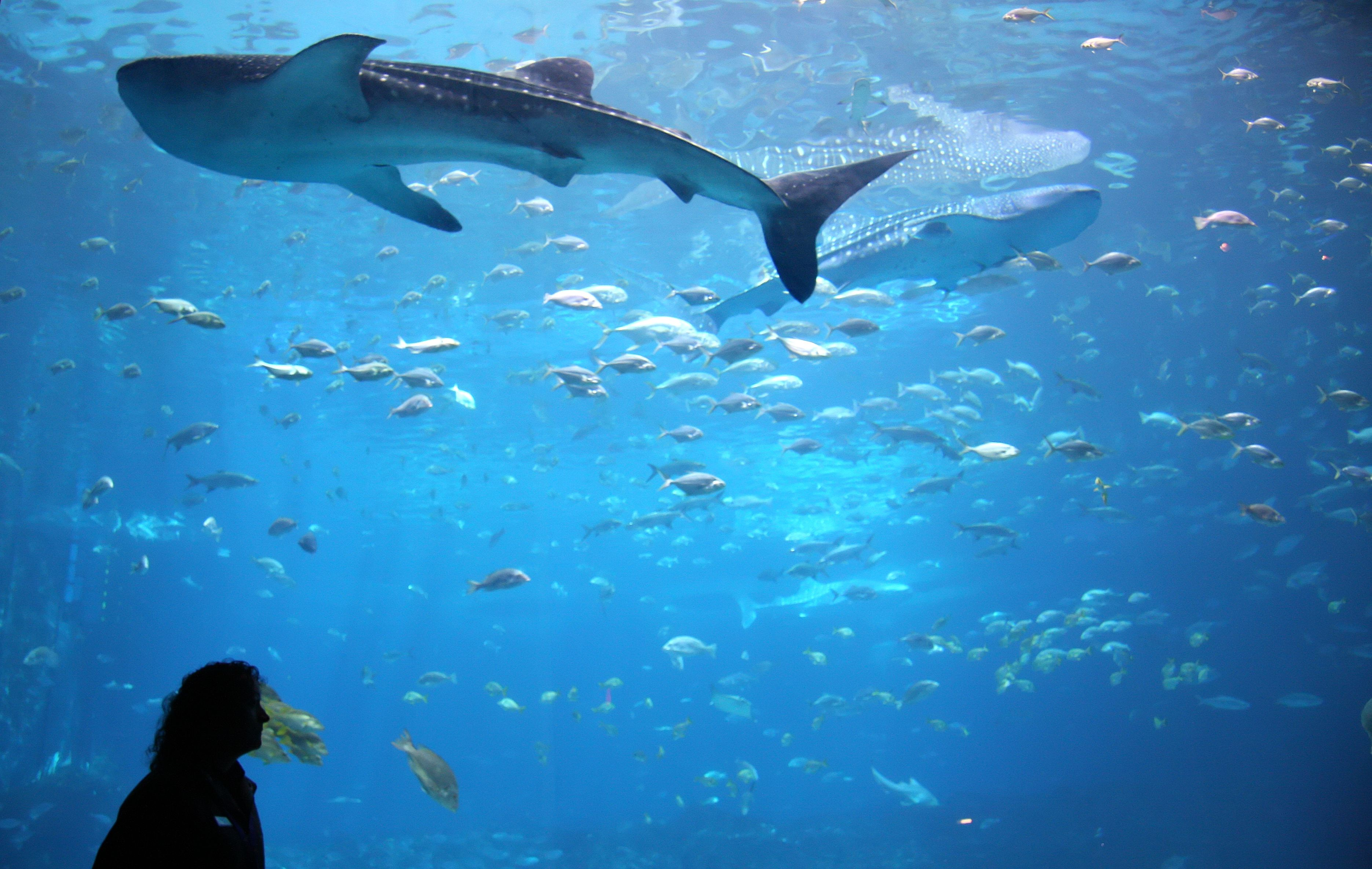 How to save money at the georgia aquarium in atlanta for Georgia freshwater fish