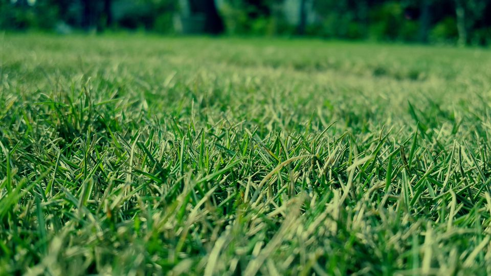 Close-Up Of Green Grass Growing On Field