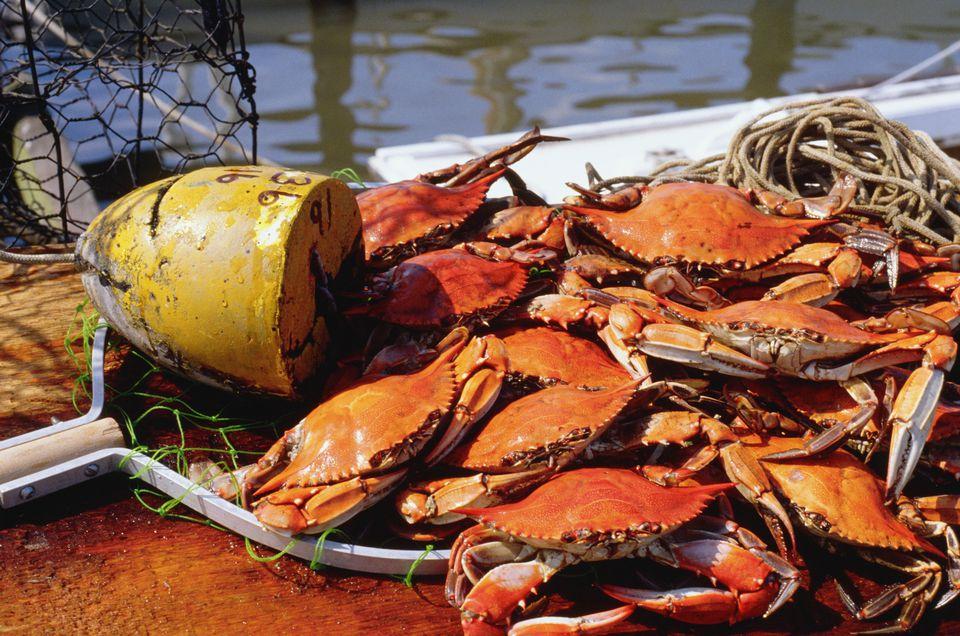 Maryland Crabs