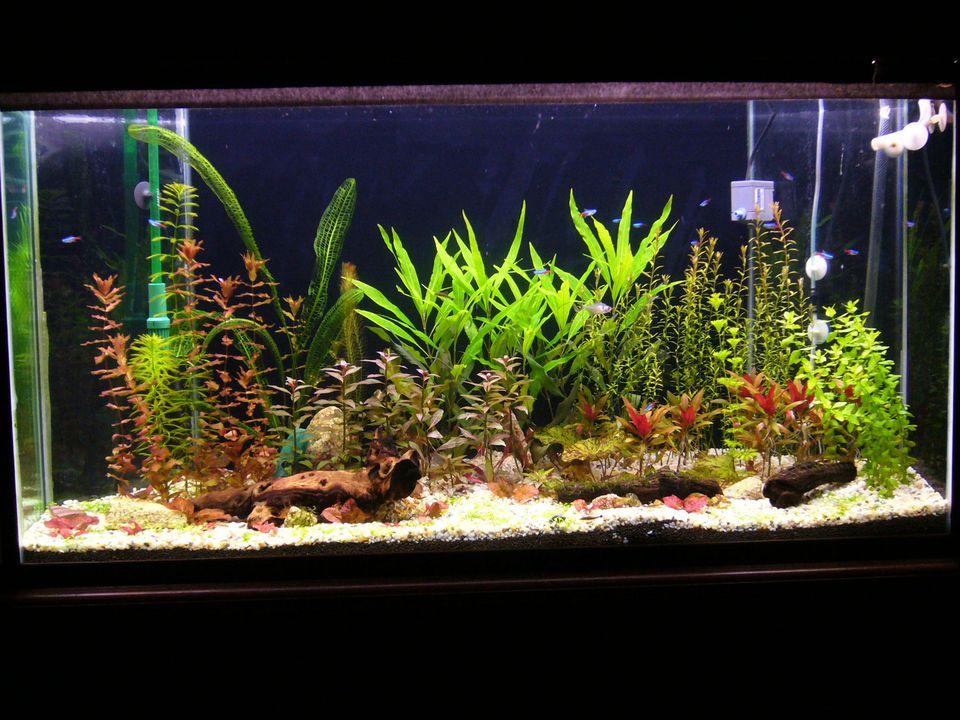 Aquarium Plants Real or Artificial