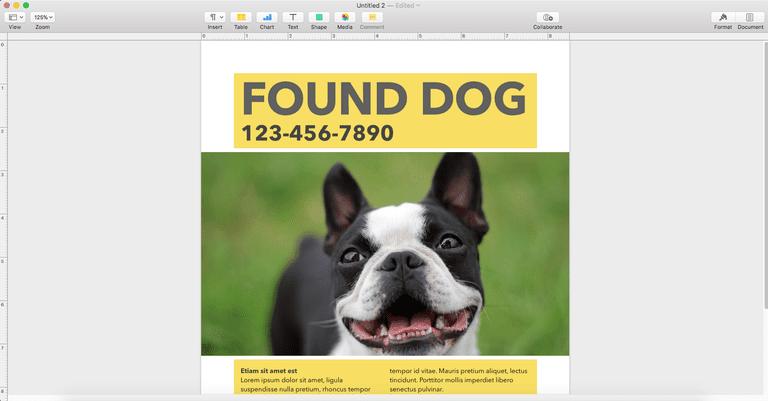 Large Image of Boston Terrier