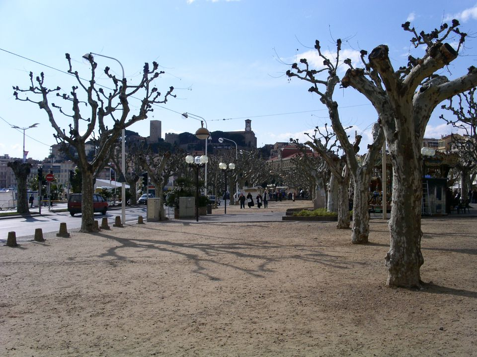 Pollarded trees in Cannes, France.