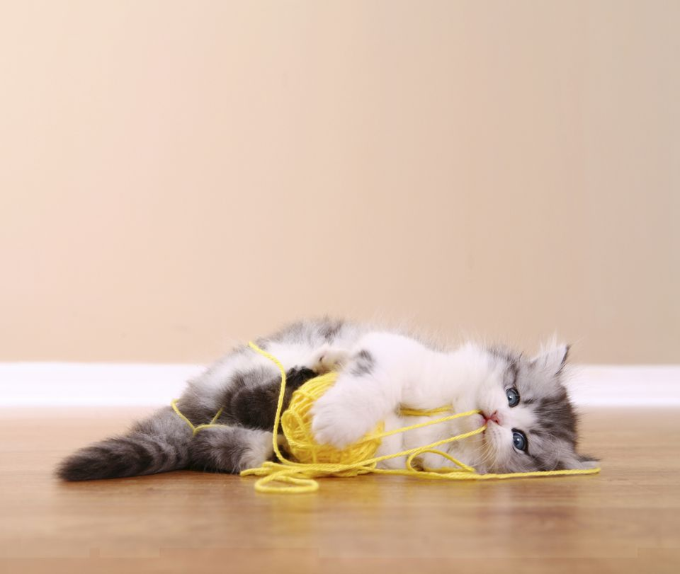 Kitten Playing With A String