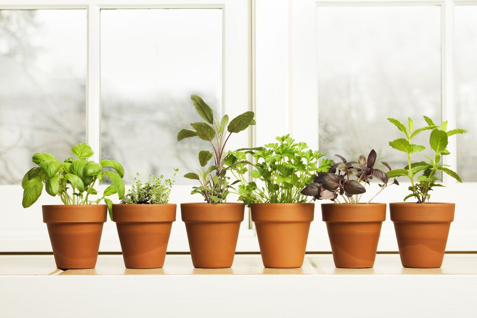 How To Grow An Indoor Medicinal Herb Garden