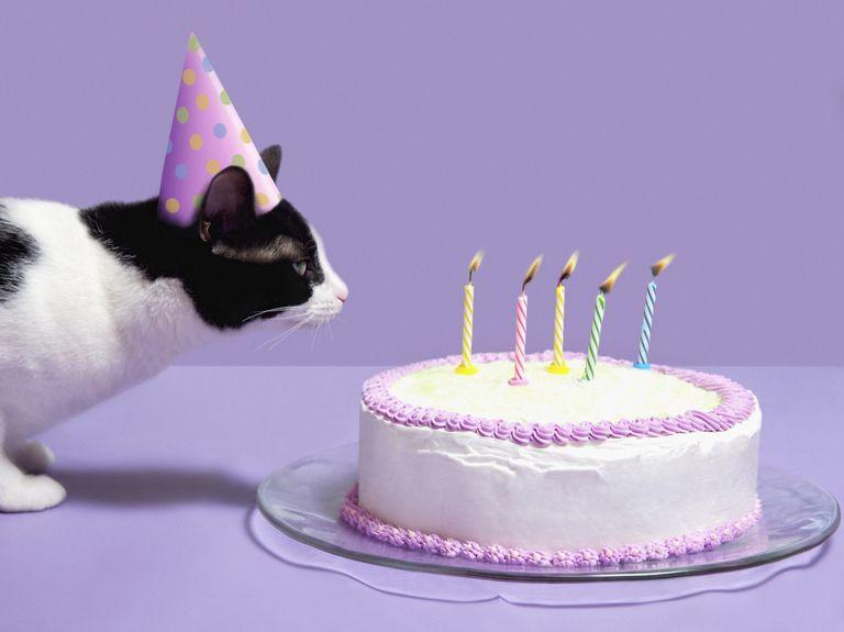 BirthdayCat_1500.jpg